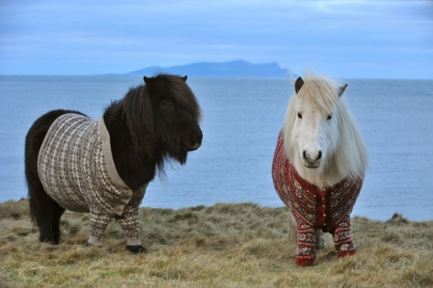shetland-ponies-cardigans-1