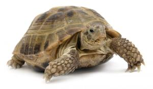 turtle[1]