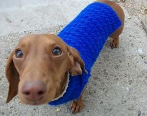 dog_sweater_020_medium[1]